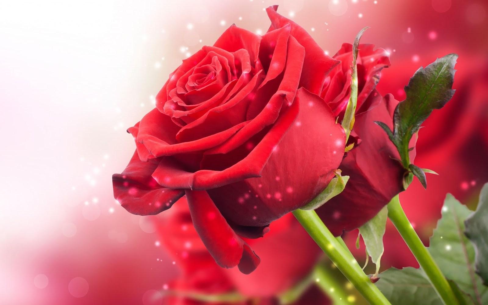 Rozen - Bloemen - Rozensoorten - Rozenkwekerij - Boeket op maat -  Rozenautomaat - assortiment rozen